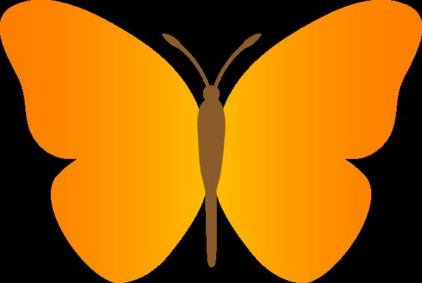 butterfly_orange